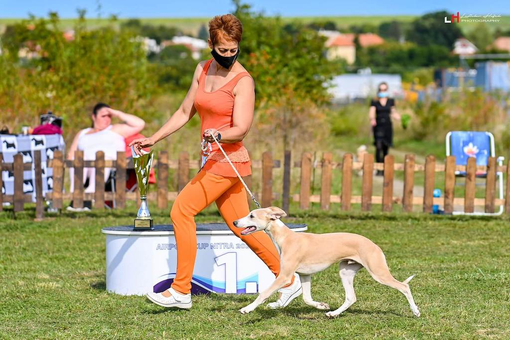 Alijamo's Gagarin Puppy Champion